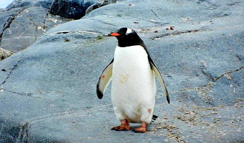 ペンギンアップデートとは