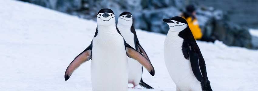 ペンギンアップデートについて